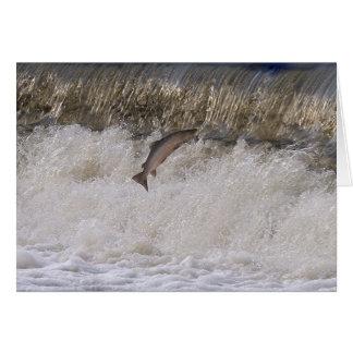 Salmon Jumping Greeting Card