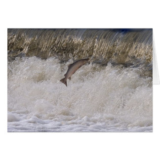 Salmon Jumping Greeting Card