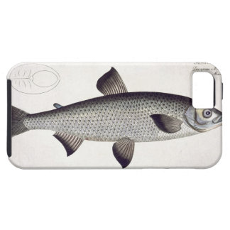 Salmon (Salmo Maraena) plate XXVII from 'Ichthyolo iPhone 5 Covers