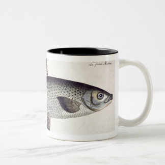 Salmon (Salmo Maraena) plate XXVII from 'Ichthyolo Mugs