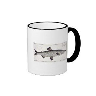 Salmon (Salmo Maraena) plate XXVII from 'Ichthyolo Ringer Mug