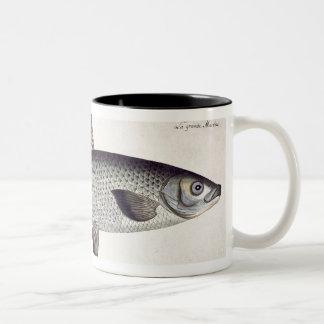 Salmon (Salmo Maraena) plate XXVII from 'Ichthyolo Two-Tone Coffee Mug