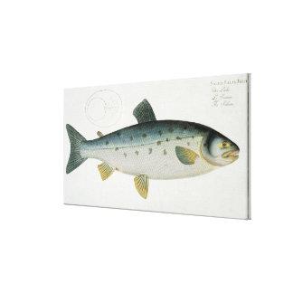 Salmon (Salmo Salar) plate XX from 'Ichthyologie, Canvas Print