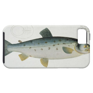 Salmon (Salmo Salar) plate XX from 'Ichthyologie, iPhone 5 Cases