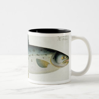 Salmon Salmo Salar plate XX from Ichthyologie Coffee Mugs