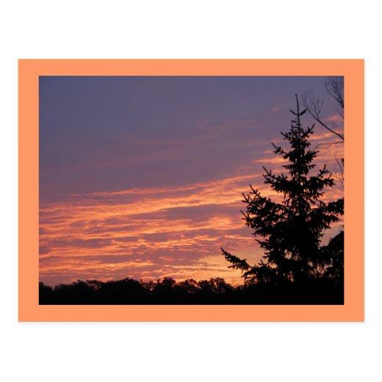 Salmon Sunrise Postcard