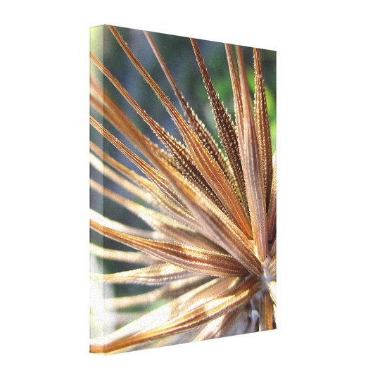 Salsify Spiky Seed Pod Canvas Print