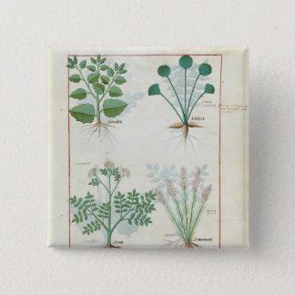 Salt Bush and Anthora Absinthium and Cardamom 15 Cm Square Badge