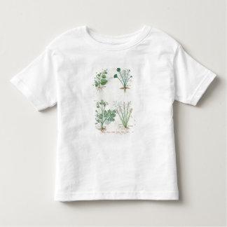 Salt Bush and Anthora Absinthium and Cardamom Toddler T-Shirt