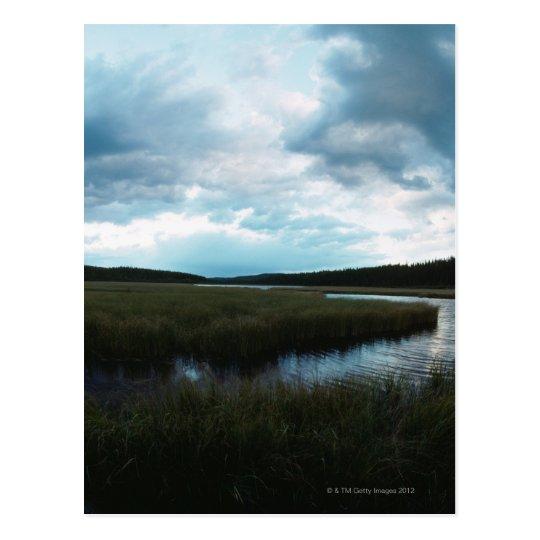 Salt marsh postcard