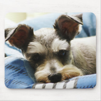 Salt & Pepper Mini Schnauzer Mouse Mat