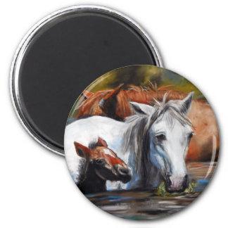 Salt River Foal 6 Cm Round Magnet