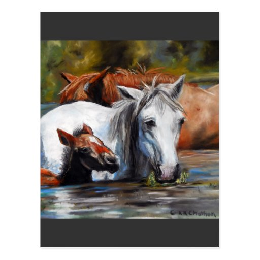 Salt River Foal Post Card