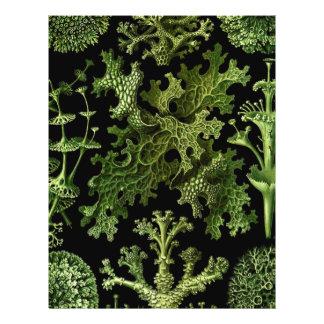 """Saltwater Plants""""Dessins sous Marin Plante"""" 21.5 Cm X 28 Cm Flyer"""