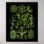 """Saltwater Plants""""Dessins sous Marin Plante"""" Posters"""
