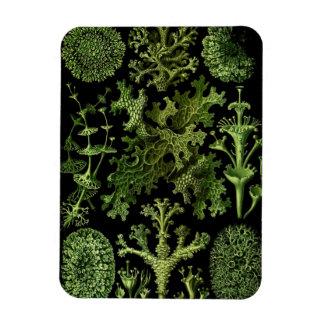 "Saltwater Plants""Dessins sous Marin Plante"" Rectangular Magnet"