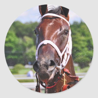 Saluda, 2 year old filly by Congaree Round Stickers
