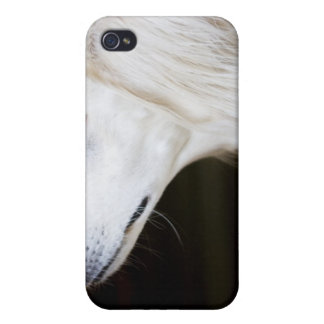 Saluki Looking Up Cases For iPhone 4