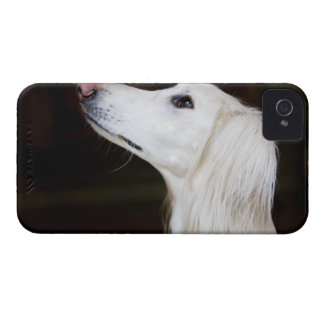Saluki Looking Up iPhone 4 Case-Mate Case