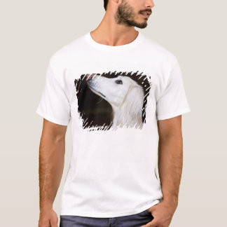 Saluki Looking Up T-Shirt