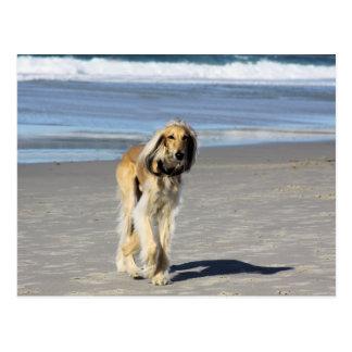 Saluki Stroll on the Beach Postcard