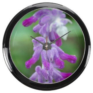 Salvia Aquavista Clock