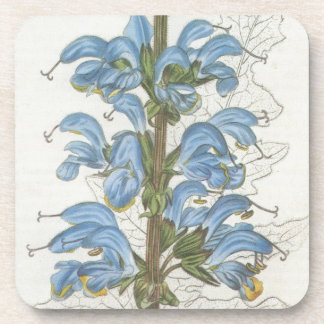 Salvia Barrelieri Beverage Coasters