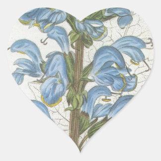 Salvia Barrelieri Heart Sticker