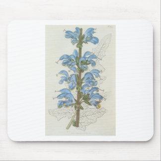 Salvia Barrelieri Mouse Pad