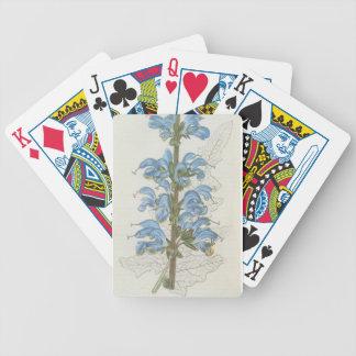 Salvia Barrelieri Playing Cards