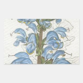 Salvia Barrelieri Rectangular Sticker