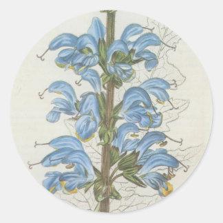 Salvia Barrelieri Round Sticker