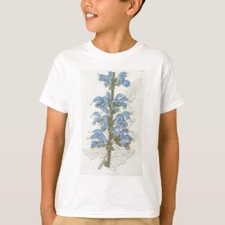 Salvia Barrelieri T Shirt
