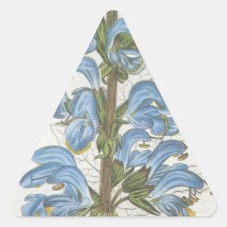 Salvia Barrelieri Triangle Sticker