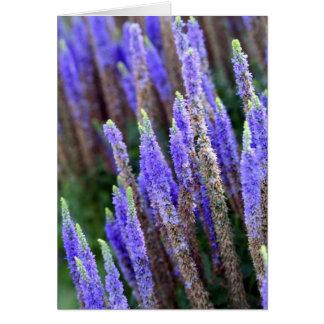 Salvia Card