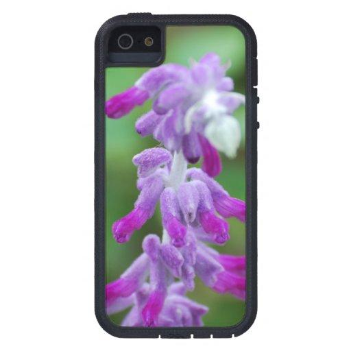 Salvia iPhone 5 Case