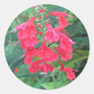 Salvia coccinea Sticker