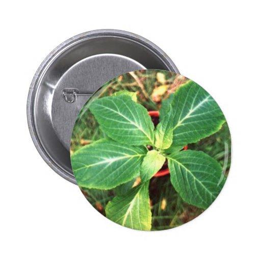 Salvia divinorum button badge