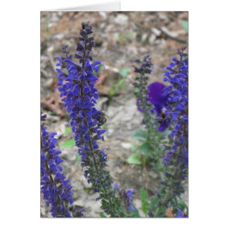 Salvia ~ First Bloom Greeting Card