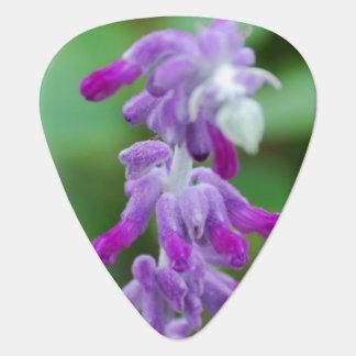 Salvia Guitar Pick