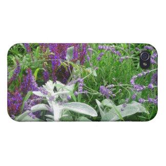 Salvia, Lavendar & Lamb's Ear Garden iPhone 4/4S Cases