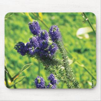 Salvia Mouse Pad