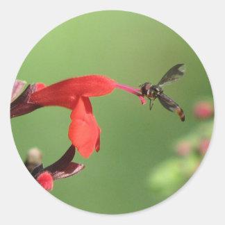 Salvia & Native Bee Sticker