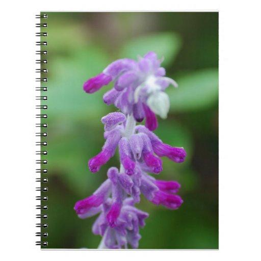Salvia Notebook