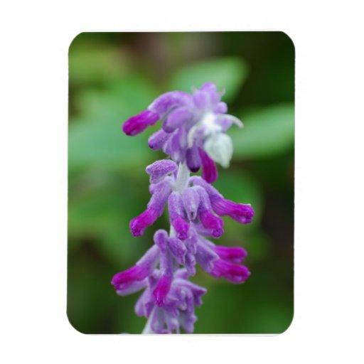 Salvia Flexible Magnet