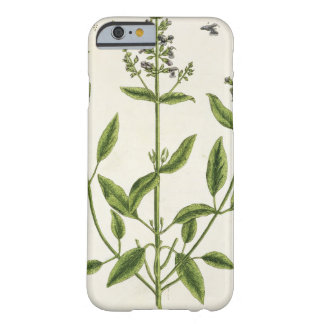 Salviam from 'A Curious Herbal', 1782 (colour engr Barely There iPhone 6 Case