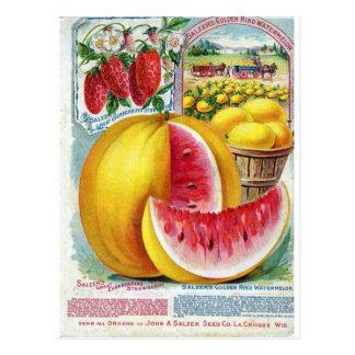 Salzer Watermelons Postcard
