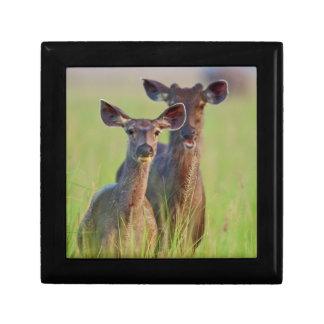 Sambar Deers in the meadows, Corbett National Park Gift Box