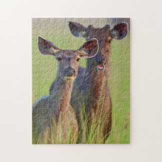 Sambar Deers in the meadows, Corbett National Park Jigsaw Puzzle