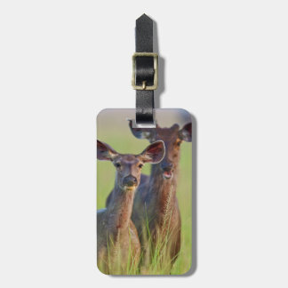 Sambar Deers in the meadows, Corbett National Park Luggage Tag